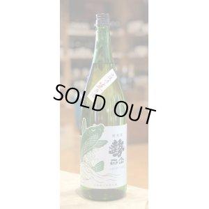 画像1: 勢正宗 Green carp 純米 無濾過生原酒 1.8L